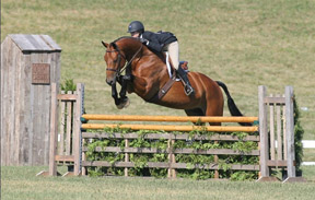 Thumbnail for Record Turnout for National Show Jumping Tournament
