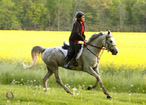 Thumbnail for Canadian Wins FEI Biltmore Challenge 160 km CEI3*