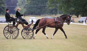 Thumbnail for FEI World Para Equestrian Driving Championships 2014
