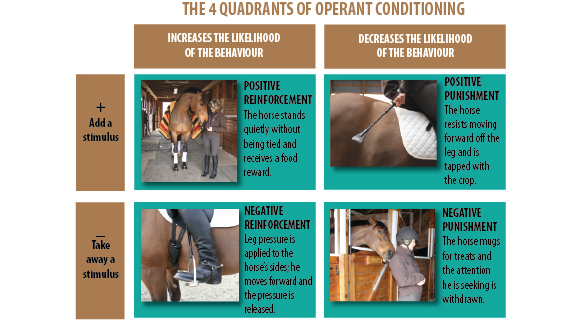Thumbnail for Positive Reinforcement:  Where Does It Fit In Equine Training?