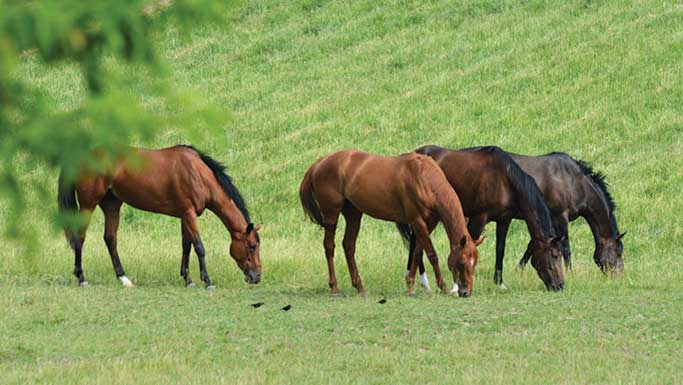 Thumbnail for A Guide to Healthier Horse Pastures and Better Grazing