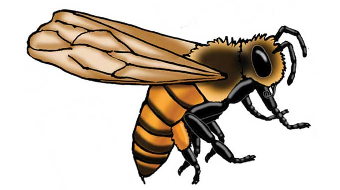 Thumbnail for Nutrition Notes: Bee Pollen