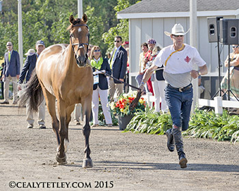 Thumbnail for Canadian Show Jumping Team Ready for Pan Am Competition
