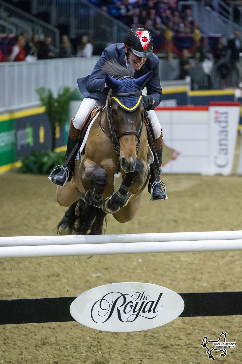 Thumbnail for Millar Family Dominates Greenhawk Canadian Show Jumping Championship
