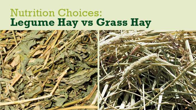 Thumbnail for Should I Feed My Horse Grass Hay or Legume Hay?