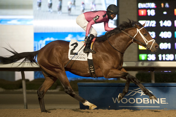 Thumbnail for Woodbine's 2017 Thoroughbred meet concludes
