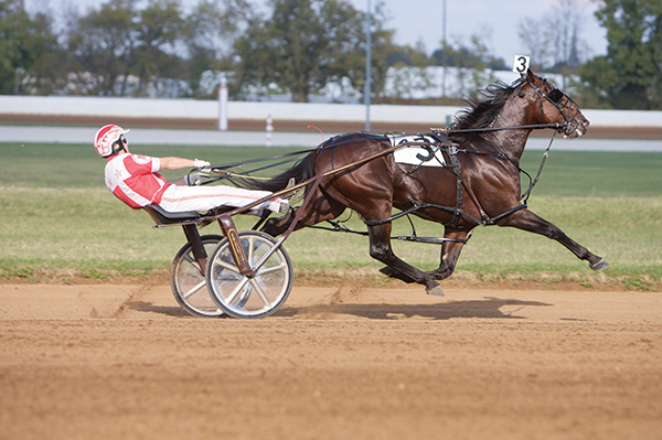 Thumbnail for Famed Harness Racing Horse Somebeachsomewhere Dies