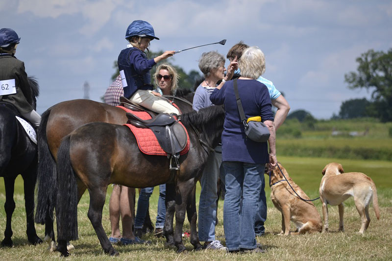 Thumbnail for FEI Set to Fine Owners of Loose Dogs at Horse Shows
