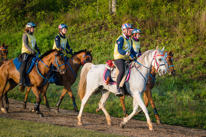 Thumbnail for Endurance Vets Meet for Conference prior to WEG Tryon 2018