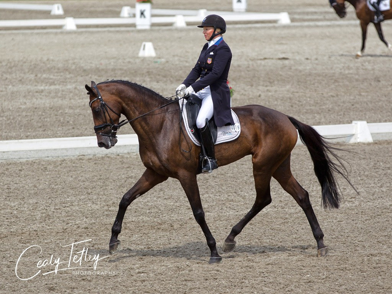 Thumbnail for Marilyn Little and RF Scandalous lead the 3* after dressage at Bromont