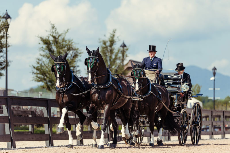 Thumbnail for Boyd Exell Leads WEG Driving After Dressage Phase