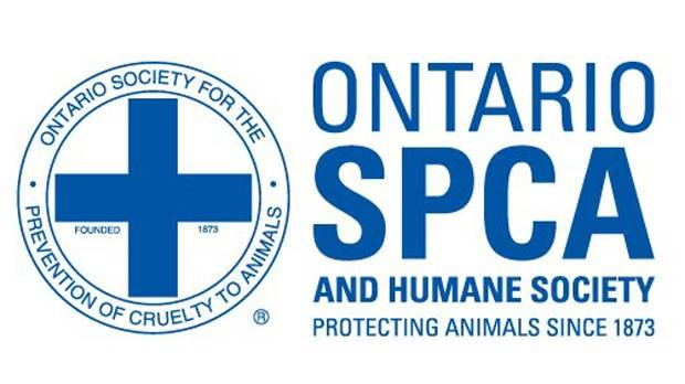 Thumbnail for OSPCA to Phase Out Cruelty Investigations for Horses and Livestock
