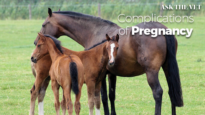 Thumbnail for Causes of Equine Abortion and Birth Defects