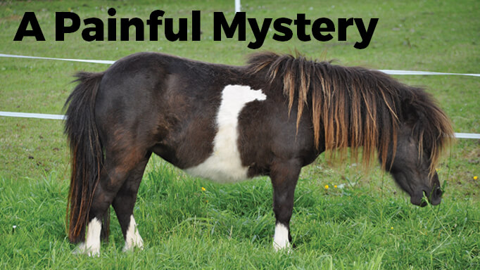 Thumbnail for Recognizing Laminitis in Horses and How to Prevent it