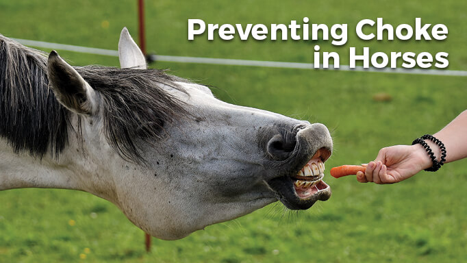 Thumbnail for What is Choke in Horses and How Can I Prevent It?