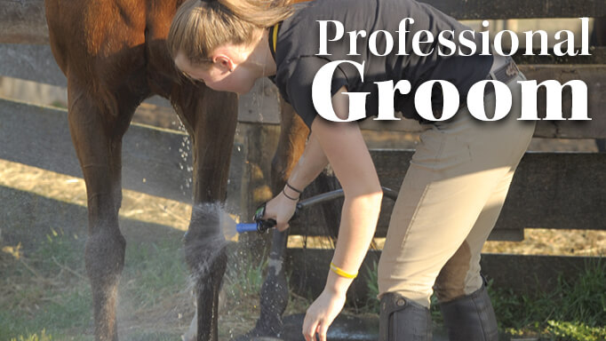 Thumbnail for How to Become a Professional Groom in the Horse Industry