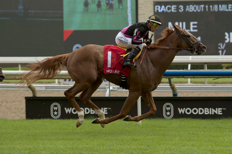 Thumbnail for Minshall-trained Armistice Day takes Toronto Cup at Woodbine