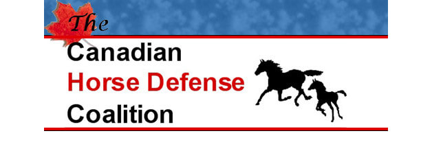 Thumbnail for Canadian Government Sued Over Transport of Horses for Meat