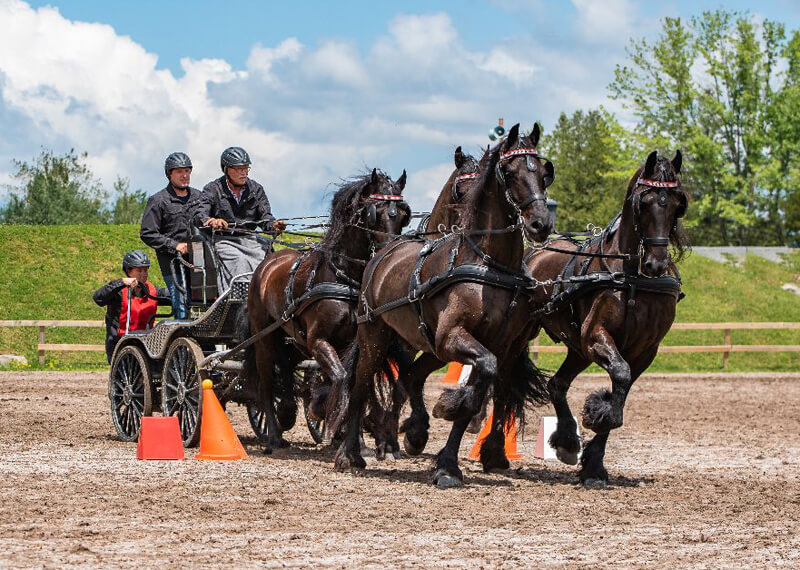 Thumbnail for Steenbeek wins Four-in-Hand at Bromont International Driving CAI2*