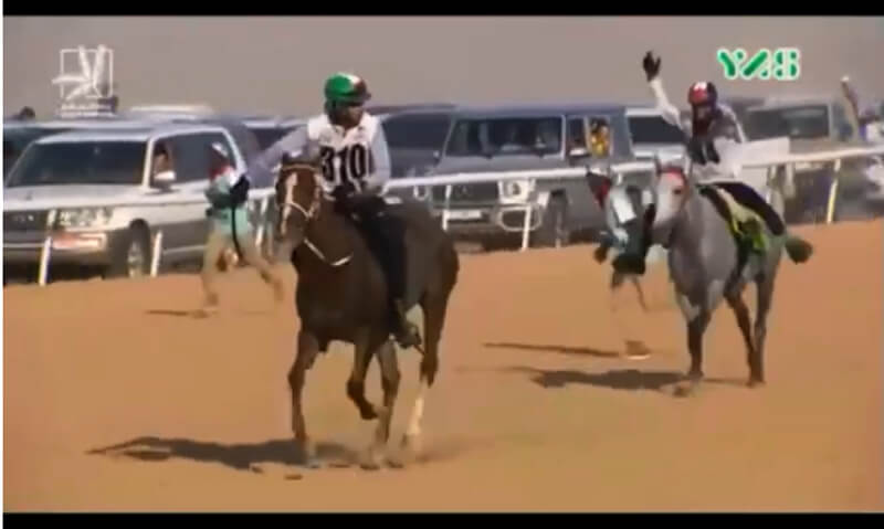 Thumbnail for Endurance Officials Criticized as Tribunal Bans Three Riders for Abuse