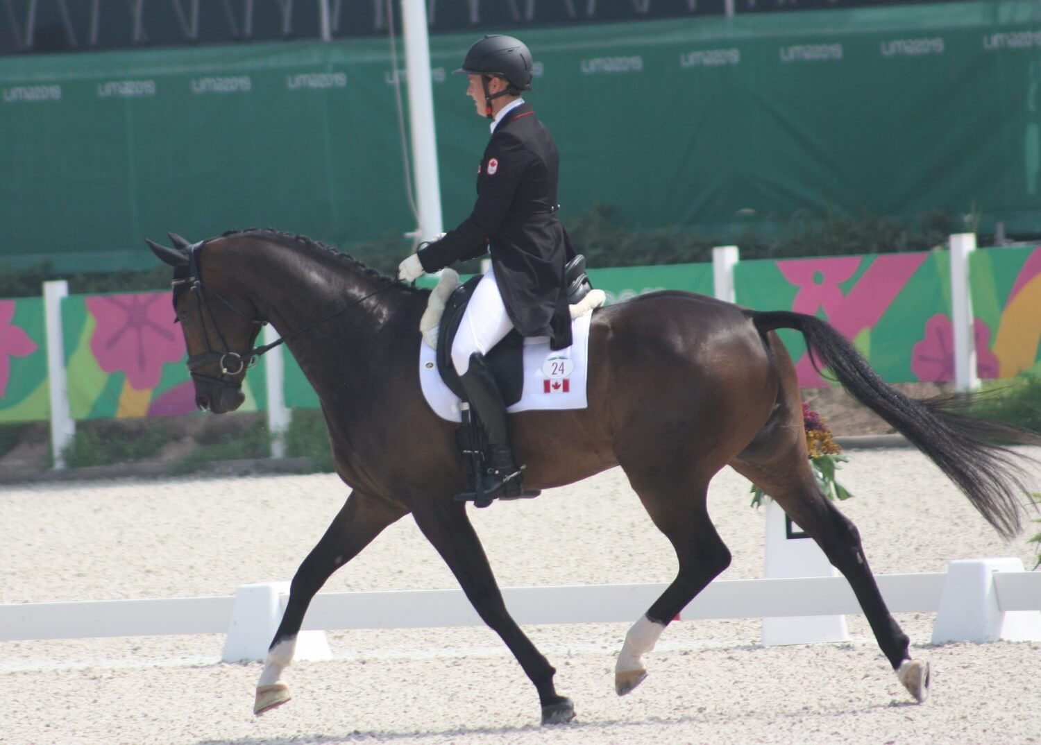 Thumbnail for Eventing Dressage: Canada Well-Positioned for Cross-Country Day at Pan Am Games