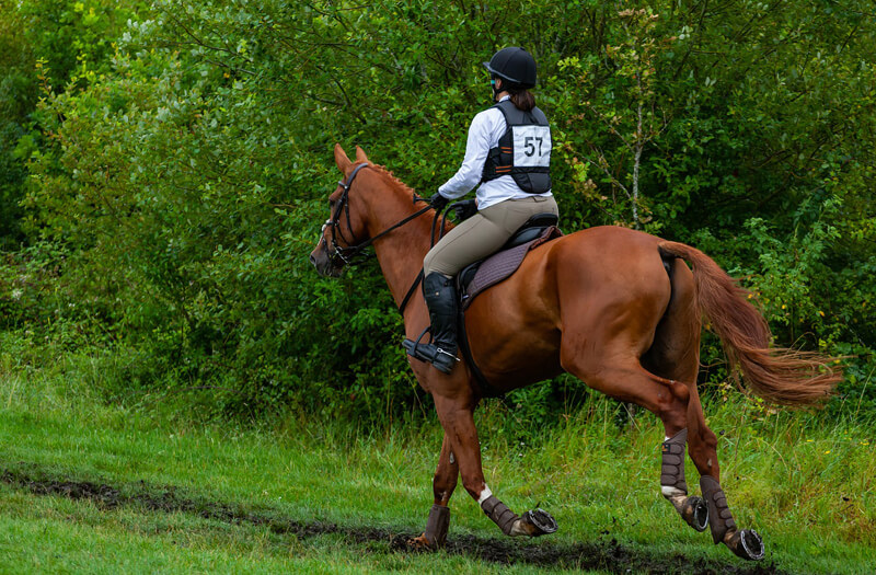 Thumbnail for Study Evaluates Impact of Rider Weight Gain on Horses
