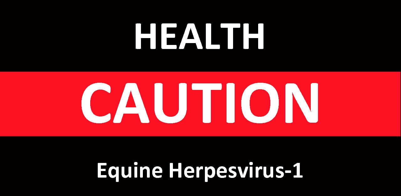 Thumbnail for Two Manitoba Mares Die from Neurological Form of Equine Herpesvirus