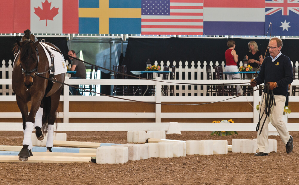 Long-lining is an effective way to fine-tune steering aids and half-halts – especially with young horses – and can also be used with older animals to navigate items such as a tarp or puddles on the ground, or that scary corner of the arena.