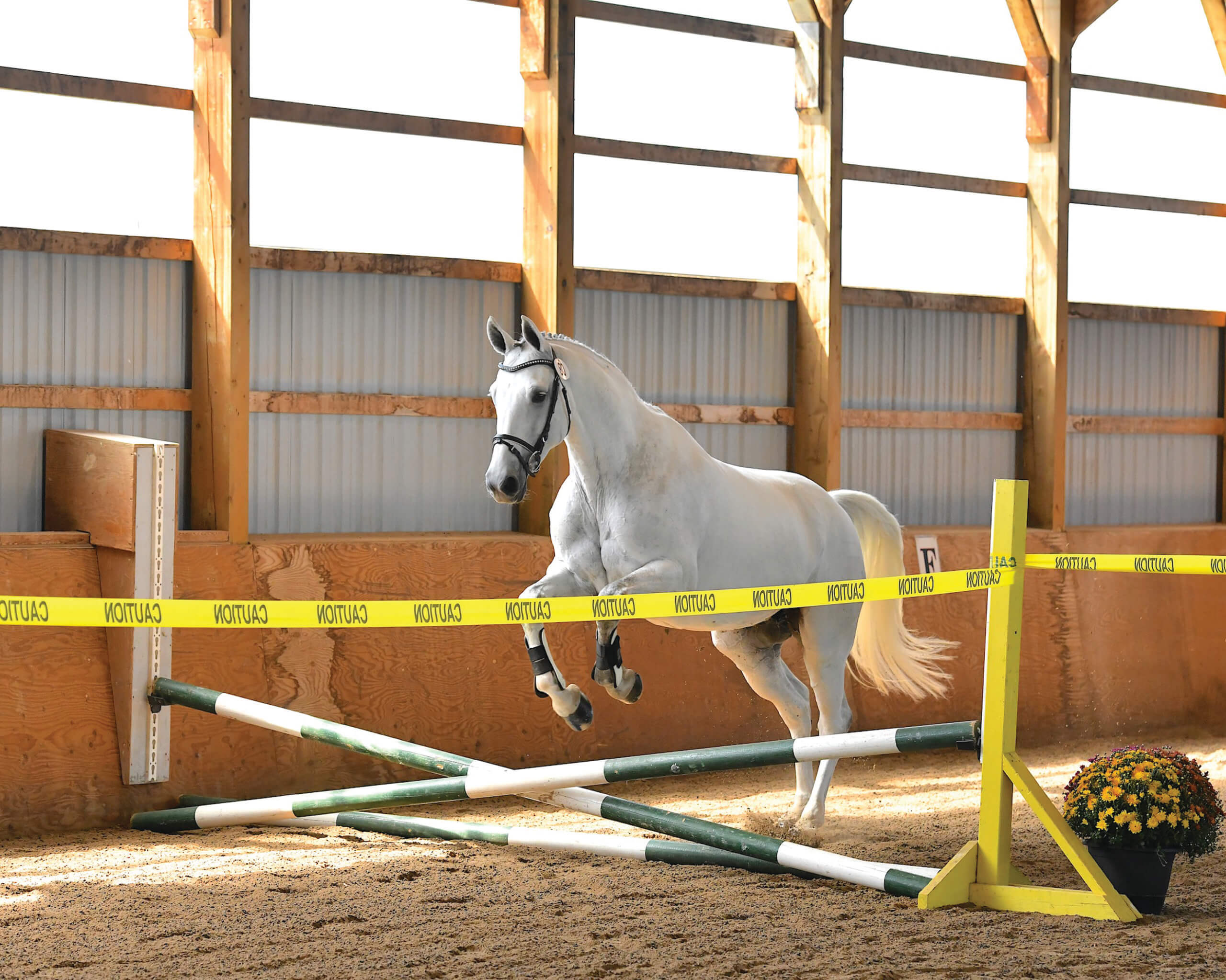 Free jumping allows the horse to use its body without rider influence or interference and can be a great confidence-builder. You may even find your horse heading for the chute without being asked!