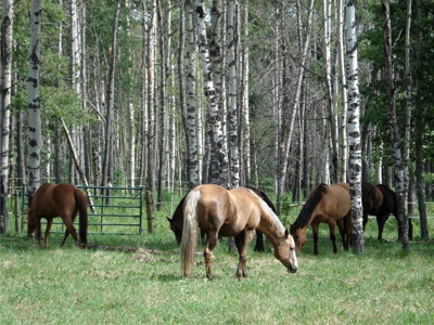 Thumbnail for $2,150,000 for an equestrian compound in Rural Mountain View County, Alberta