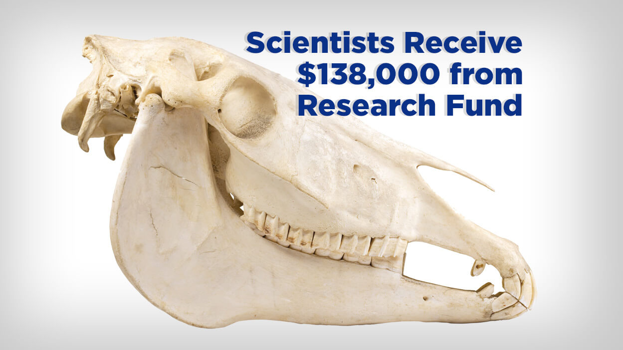 Thumbnail for Scientists Receive $138,000 for Equine Musculoskeletal Studies