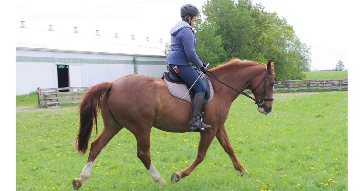 Thumbnail for Creating Connection: Finding harmony with your horse through the bit