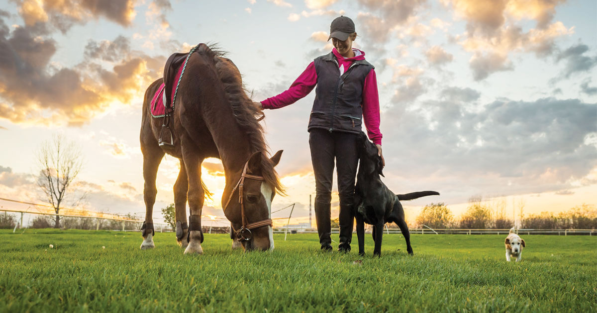Although Mane 'n Tail products have been developed specifically for both humans and horses over the years, customers have found they also work wonders on dogs and even cats!