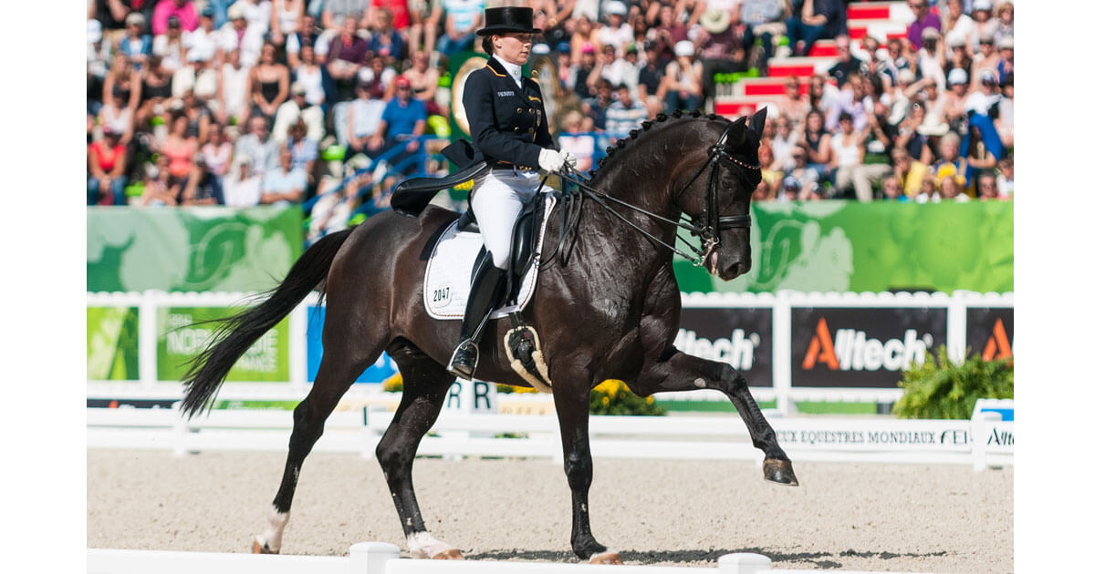 Thumbnail for Kristina Bröring Sprehe's dressage stallion Desperados FRH dead at 19