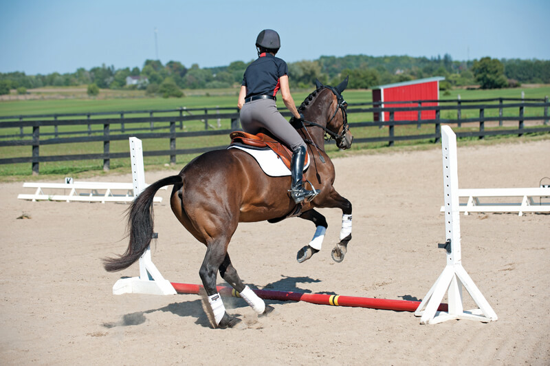 Begin by simply cantering past fences, adjusting your stride for an imaginary take-off spot. Then progress to actual poles on the ground. The beauty of these exercises is that neither will overwork or overface your horse. (Andrew Bailini photo)