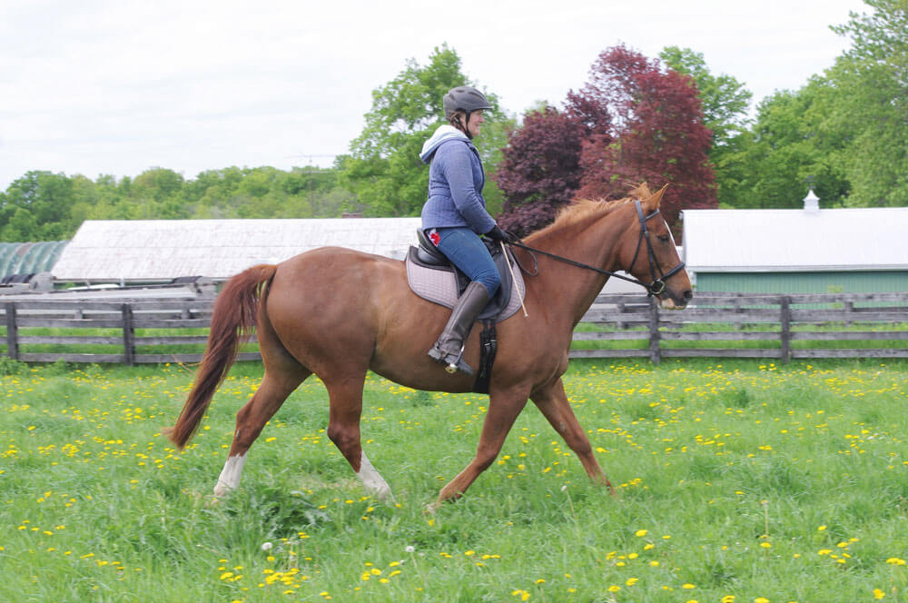 When the back is rigid or dropped, the same tension or inversion often replicates through to the poll. If a heavy-handed rider tried to coerce a frame, it would restrict the neck, in turn blocking the shoulder, and perpetuate the cause of the issue.