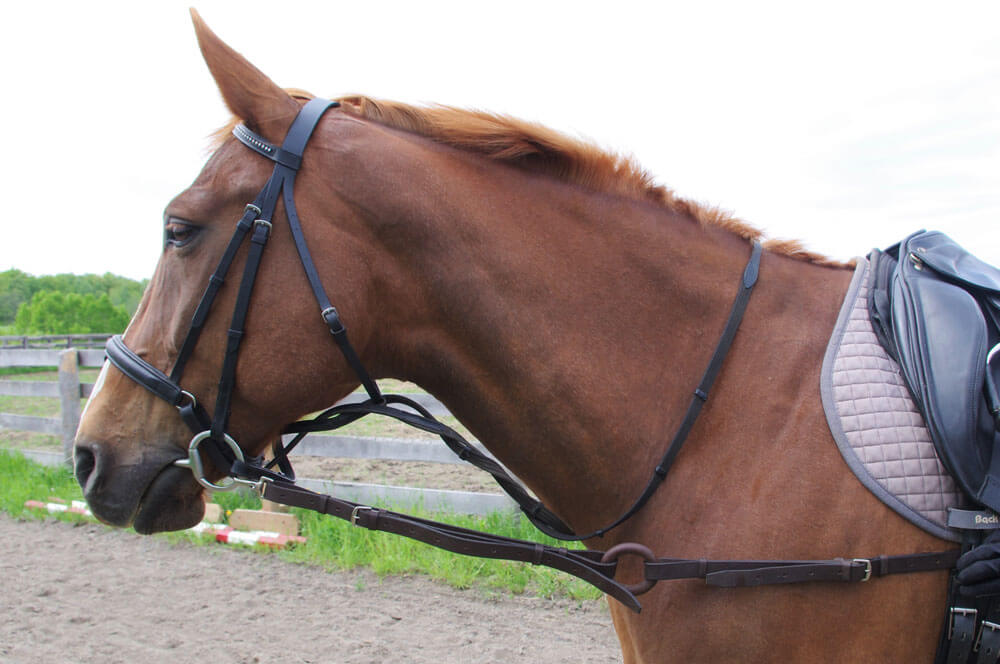 If the horse is able to stand comfortably with side reins attached, he'll maintain enough freedom through the neck and shoulder to be encouraged to reach into the contact without restriction.