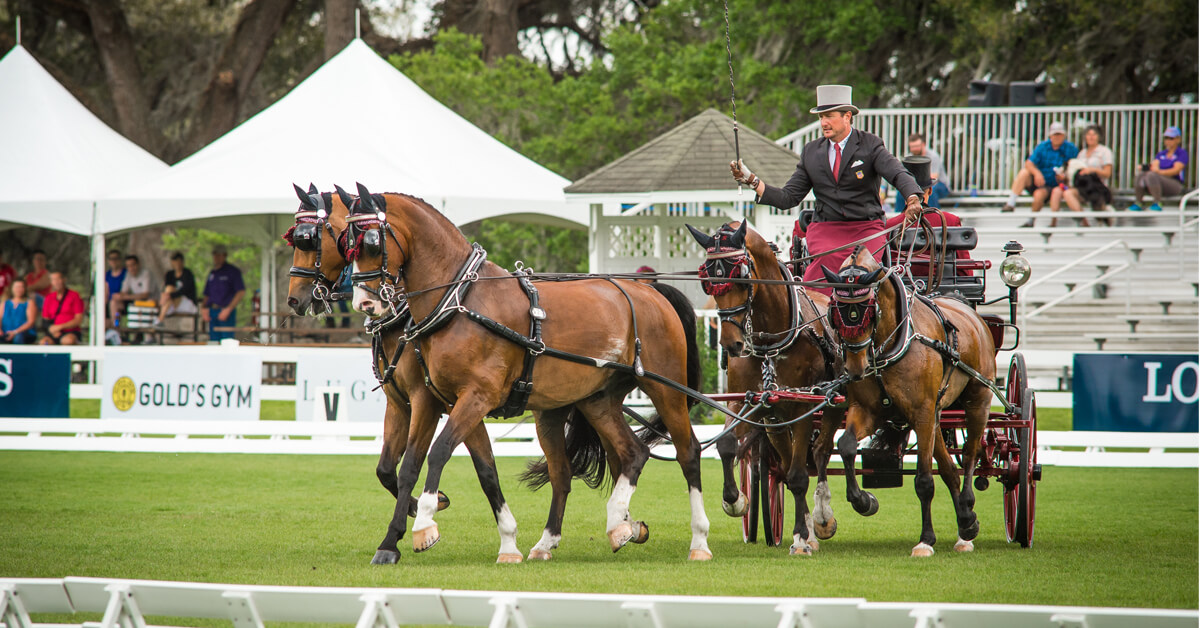 Thumbnail for Chester Weber Leads after Advanced Four-In-Hand Dressage at Live Oak