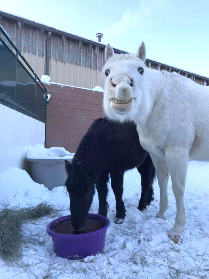 Little Boo and Sully were rescued from auction by Haven 4 Hooves. (Haven 4 Hooves photo)