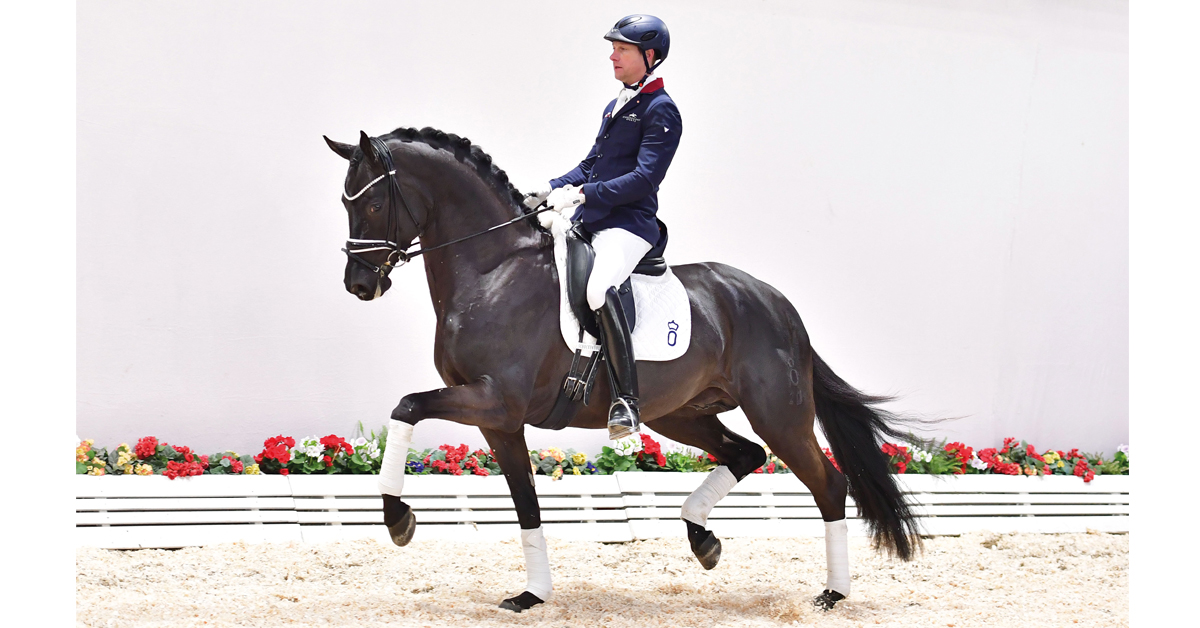 The four-year-old black stallion Movie Star attracted the top price of 250,000 euros at the Oldenburg Online Elite Auction.