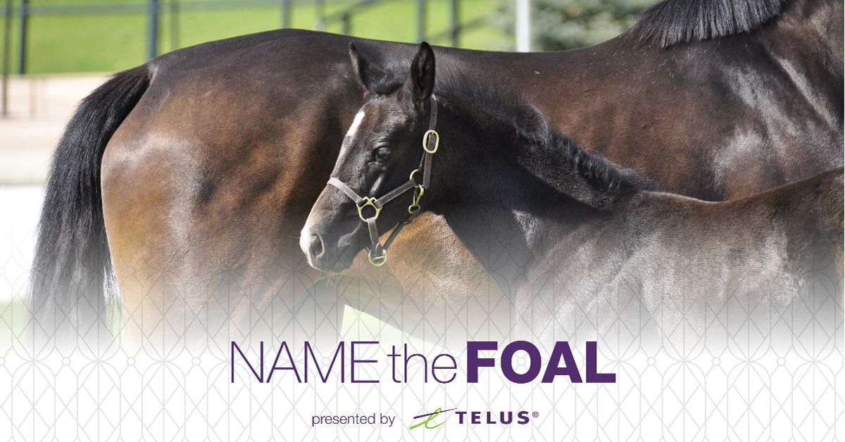 Thumbnail for Meet the Foals! Help Name the Beautiful Babies at Spruce Meadows