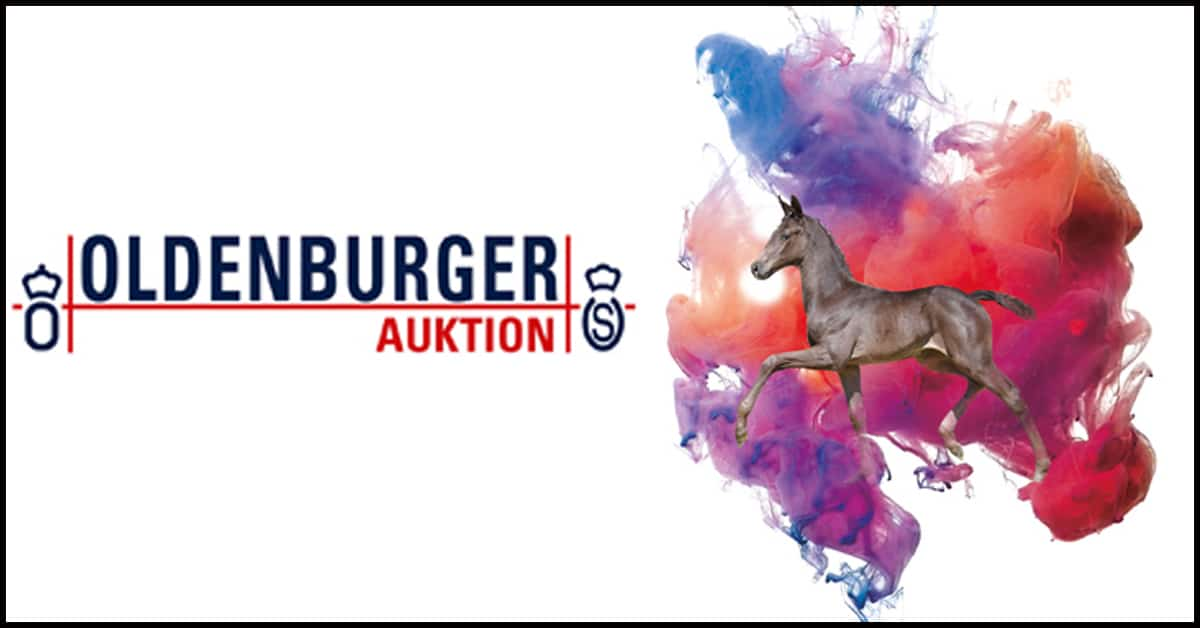 Thumbnail for Third Edition of the Oldenburger Elite Foal Collection Online
