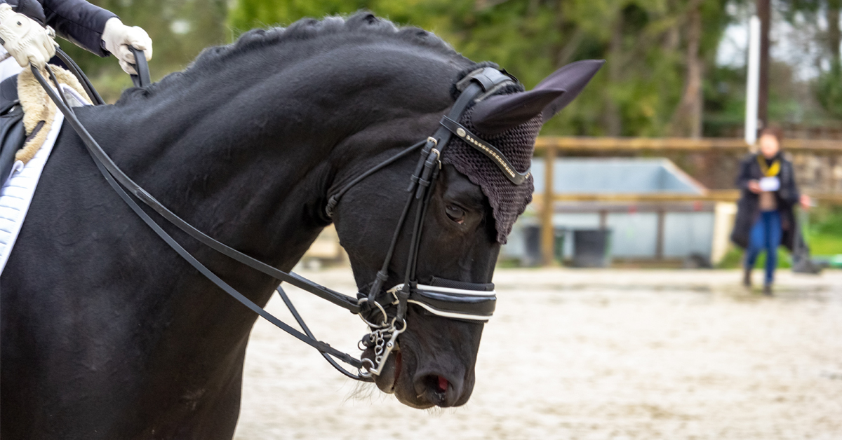 Thumbnail for EC presents Free Webinar with Canada's FEI 5* Dressage Judges