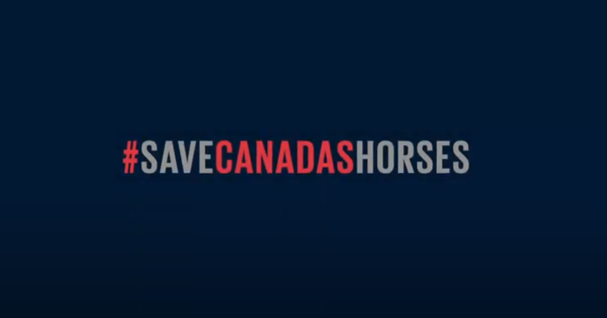 Thumbnail for EC Launches #SaveCanadasHorses for COVID-19 Relief