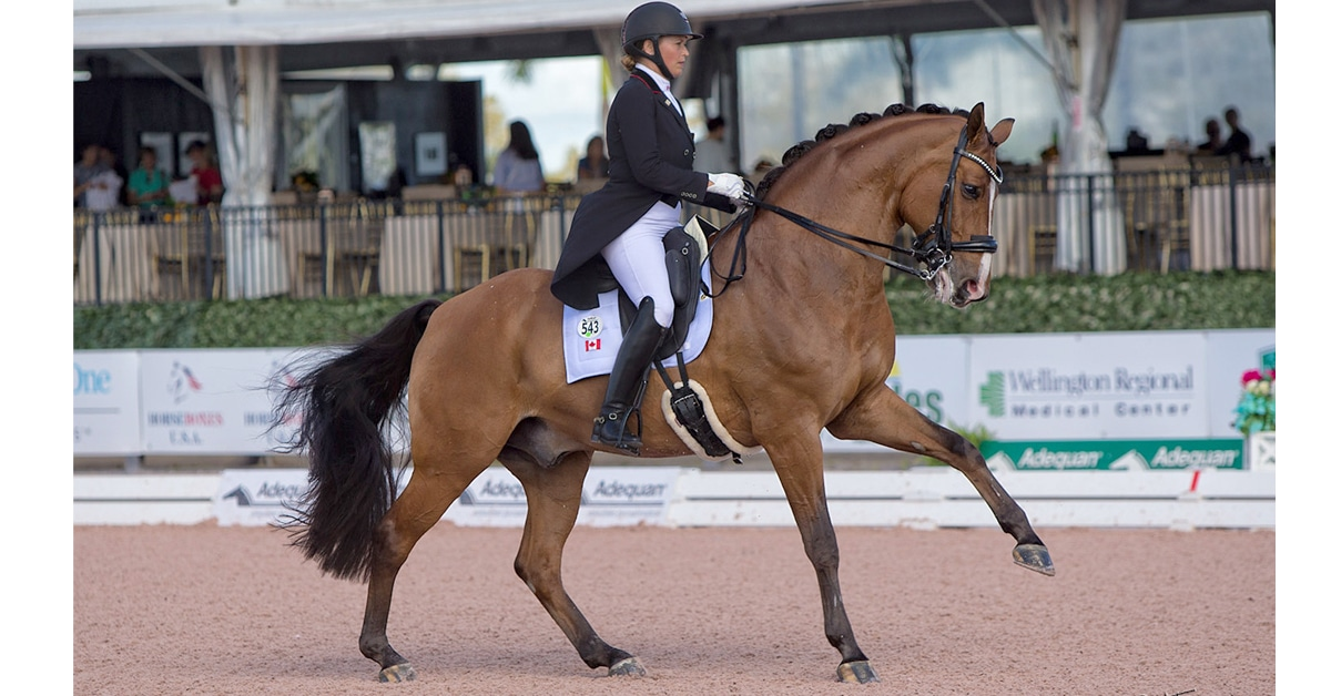 Denielle Gallagher and Wilson Pickett competing in Wellington, Florida this past winter. (Cealy Tetley photo)