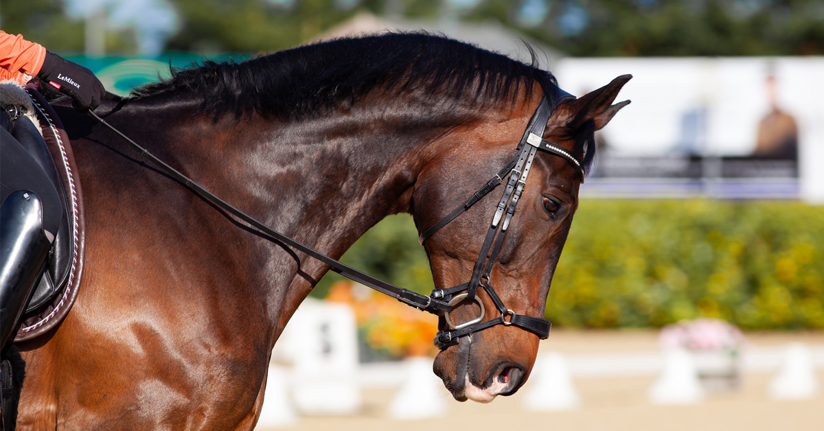 Thumbnail for Free EC Webinar: Para-Dressage Video Competition Series