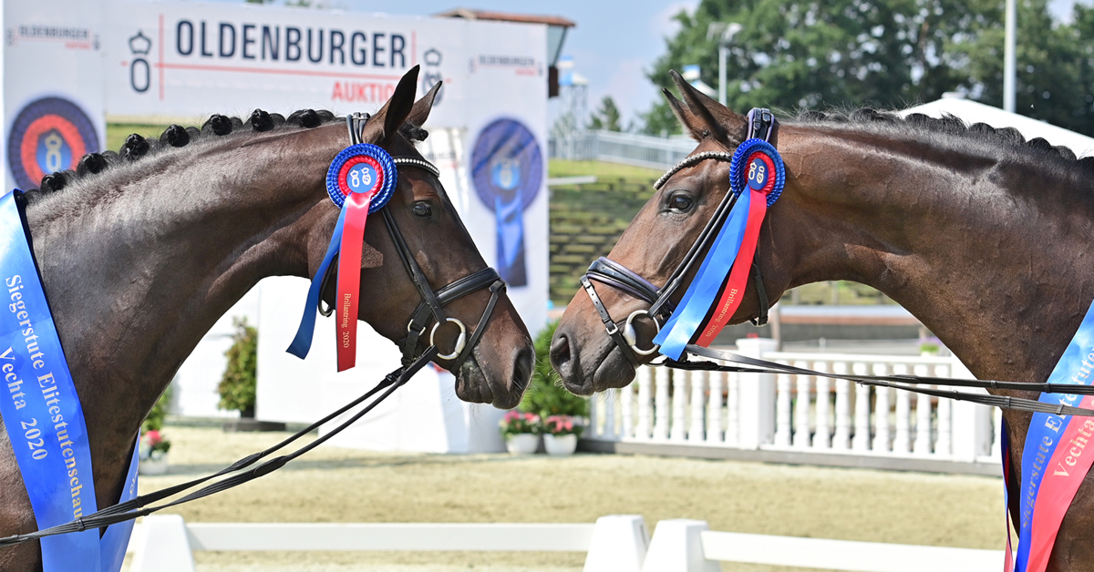 Thumbnail for Ladies Sparkle at the Oldenburg Elite Broodmare Show in Germany