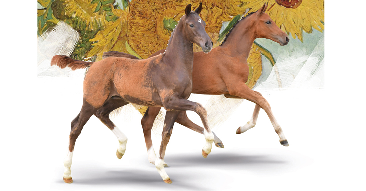 Thumbnail for Elite Oldenburg Foal Collection is Now Available Online
