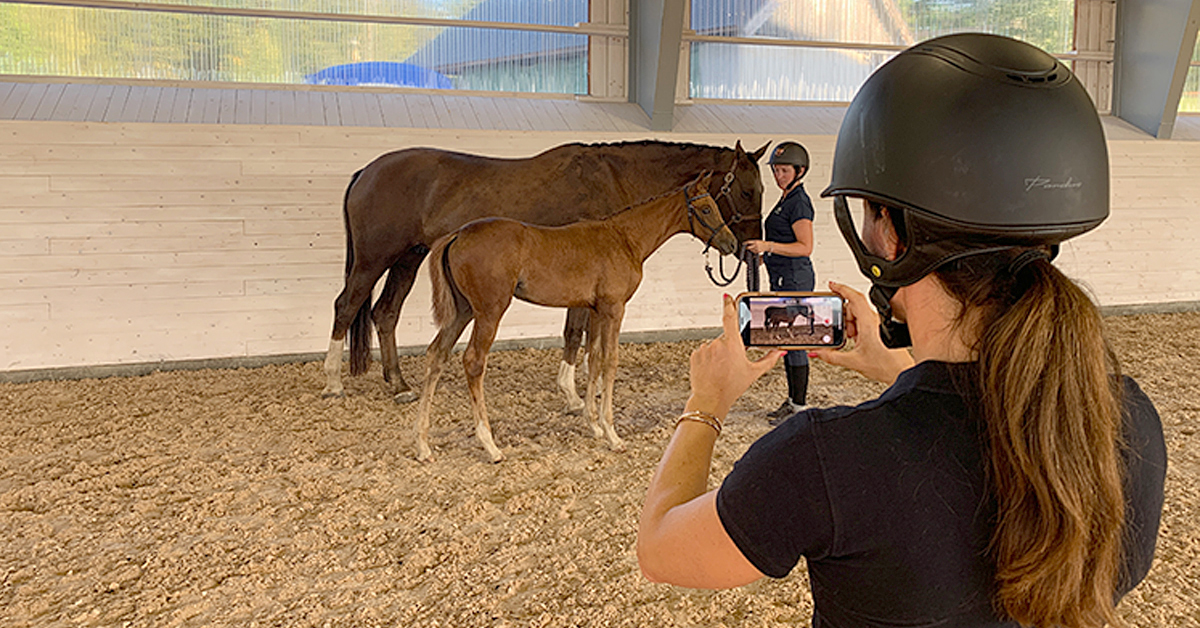 Thumbnail for Digital Live Inspection of Foals Available During Covid-19