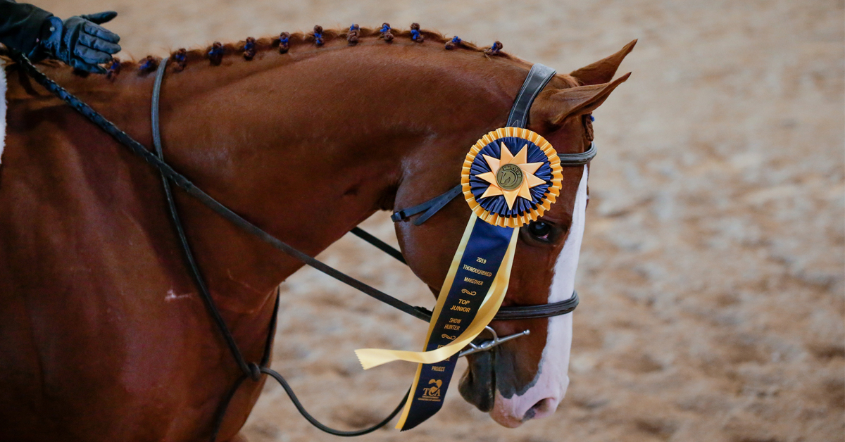 Thumbnail for TCA to Continue Role as Title Sponsor of Thoroughbred Makeover